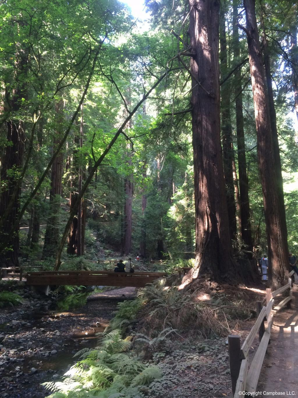 Muir Woods National Monument Mill Valley California