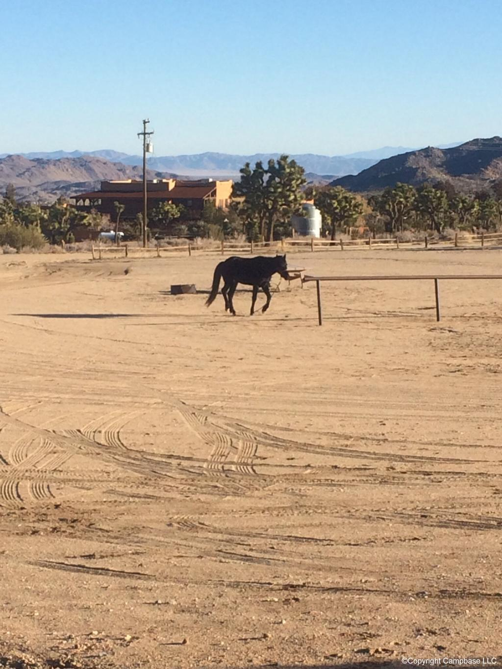 Black Rock Canyon Equestrian Campground Yucca Valley