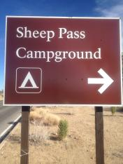 Sheep Pass Campground Joshua Tree NP
