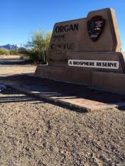 Twin Peaks Campground Organ Pipe NP